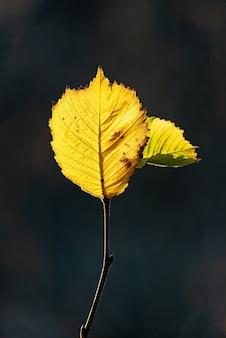 Verticale close-up opname van een boomtakje met heldere herfstbladeren