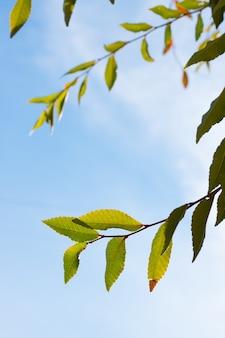 Verticale close-up shot van de bladeren op de takken van een boom met de lucht op de achtergrond