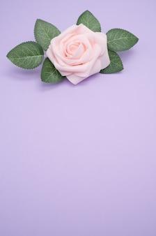 Verticale close-up shot van een enkele roze roos geïsoleerd op een paarse achtergrond met kopie ruimte
