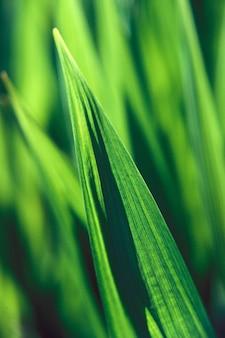 Verticale close-up shot van een groen blad met een wazige natuurlijke achtergrond overdag