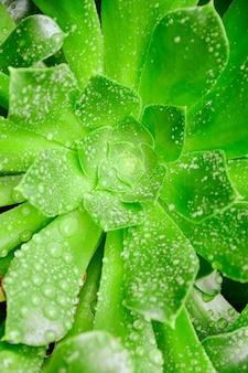 Verticale close-up shot van een groene plant bedekt met dauwdruppels
