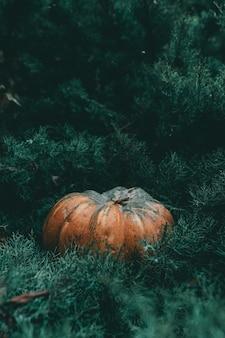 Verticale close-up shot van een pompoen in een dennenboom