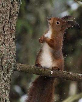 Verticale close-up shot van een schattige kleine eekhoorn zittend op een boomtak met een onscherpe achtergrond
