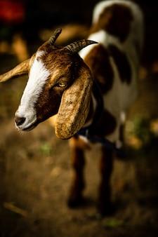 Verticale close-up shot van het hoofd van een schattige geit