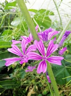 Verticale close-up shot van mooie malva sylvestris bloem bloeien in de tuin