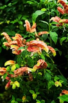 Verticale close-up shot van prachtige alstroemeriaceae bloemen met groene bladeren