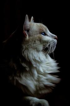 Verticale close-up van een dikke witte kat die in het donker naar rechts kijkt