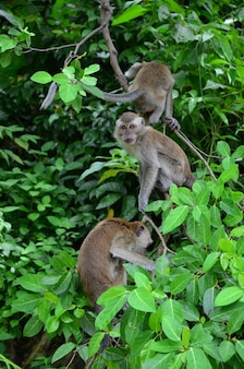 Verticale close-up van makaken die op een boomtak klimmen climbing