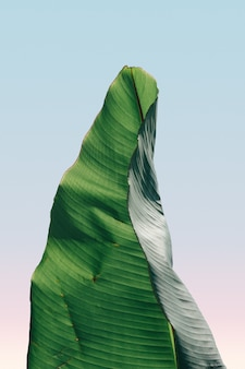 Verticale close-up weergave van een bananenblad onder de blauwe hemel