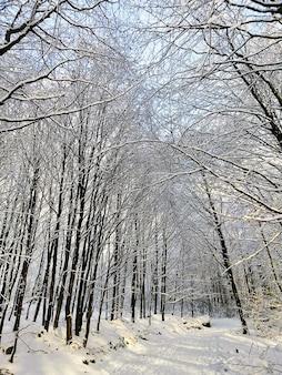 Verticale foto van bomen in een bos bedekt met de sneeuw in larvik in noorwegen