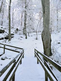 Verticale foto van bomen omgeven door houten hekken bedekt met de sneeuw in larvik in noorwegen
