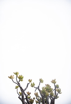 Verticale geïsoleerde boomtakken op wit