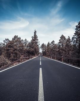 Verticale hoge hoek shot van een snelweg omgeven door bomen onder de blauwe hemel