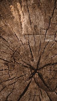 Verticale houten textuur van gesneden boomboomstam, boom-ringen, close-up achtergrondtextuur