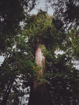 Verticale lage hoek die van een hoge boom in het bos is ontsproten