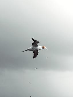 Verticale lage hoek die van een zeemeeuw is ontsproten die in de lucht in het bewolkte weer vliegt