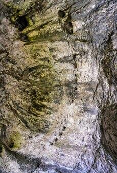 Verticale lage hoek opname van de prachtige stenen muren bedekt met mos in een natuurlijke grot