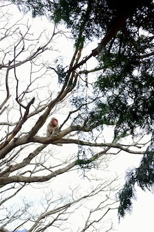 Verticale lage hoek shot van een aap zittend op de tak van een boom