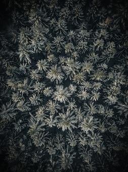 Verticale luchtfoto van bomen in een bos