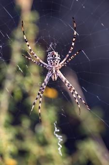 Verticale macro-opname van een spin in een spinnenweb