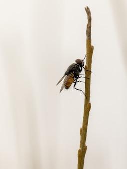 Verticale macro-opname van een vlieg op een dunne tak