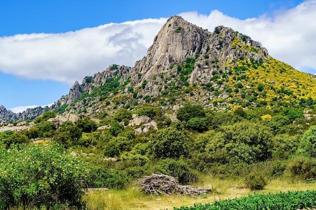 Verticale muur rotsachtige berg met groene planten en gele bloemen