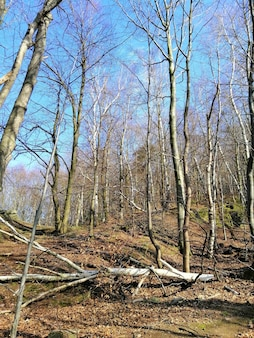 Verticale opname van bomen, gebladerte en gebroken takken in het bos van jelenia góra, polen