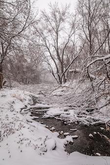 Verticale opname van bos en rivier bedekt met witte sneeuw tijdens de winter