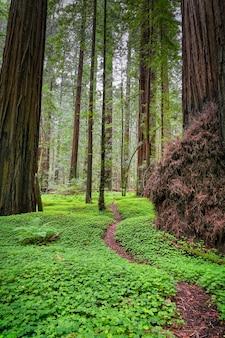 Verticale opname van de avenue of the giants in californië