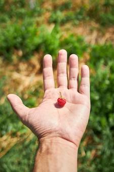 Verticale opname van de hand van een persoon met een enkele framboos op zijn handpalm