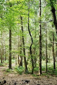 Verticale opname van de hoge bomen die overdag in het bos groeien