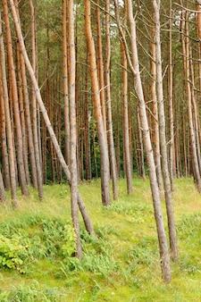 Verticale opname van de hoge bomen in het bos