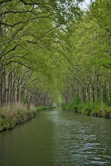 Verticale opname van de rivier die door groene bossen stroomt