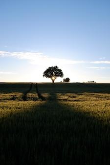 Verticale opname van de zon die opkomt boven een greenfield vol met verschillende soorten planten