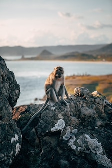 Verticale opname van een aap zittend op de rots met een prachtige wazige zee