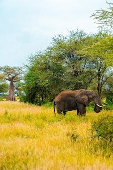 Verticale opname van een afrikaanse olifant die bij daglicht in een veld loopt