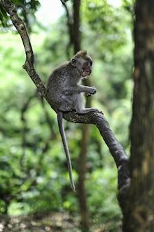 Verticale opname van een baby makaak zittend op een boomtak