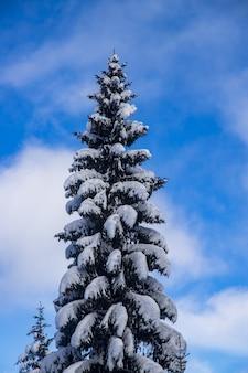 Verticale opname van een besneeuwde spar op een bewolkte dag
