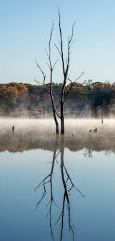 Verticale opname van een bladloze boom die reflecteert in een meer met een mistige achtergrond