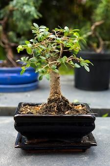 Verticale opname van een bonsaiplant op een onscherpe achtergrond