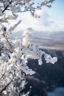 Verticale opname van een boom bedekt met sneeuw, mooie ochtend in de bergen