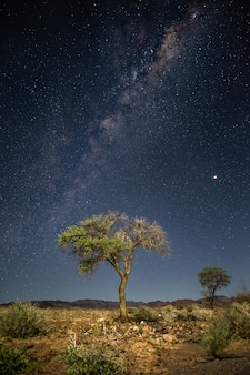 Verticale opname van een boom met de adembenemende melkweg op de achtergrond