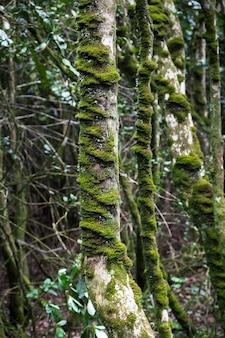 Verticale opname van een boom met mos erop in het bos