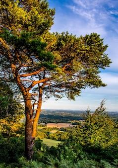Verticale opname van een boom op een heuvel