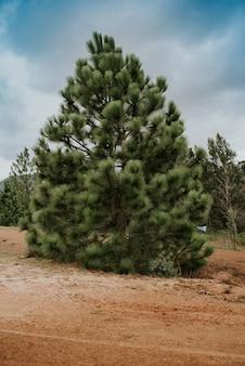 Verticale opname van een dennenboom met bomen en bewolkte lucht op de achtergrond