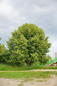 Verticale opname van een enkele groene verse boom overdag