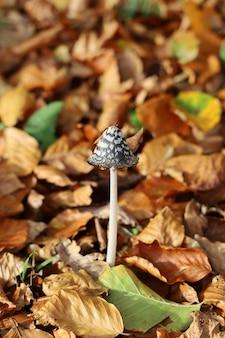 Verticale opname van een enkele zwart-witte paddenstoel omringd door gele bladeren