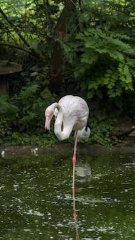 Verticale opname van een flamingo die in het groene meer staat