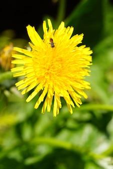 Verticale opname van een gele bloem en een bij erop