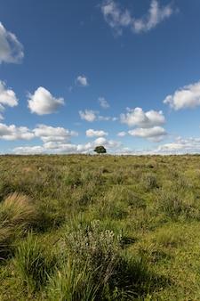 Verticale opname van een groen veld met een enkele boom op de achtergrond en witte wolken in de blauwe lucht